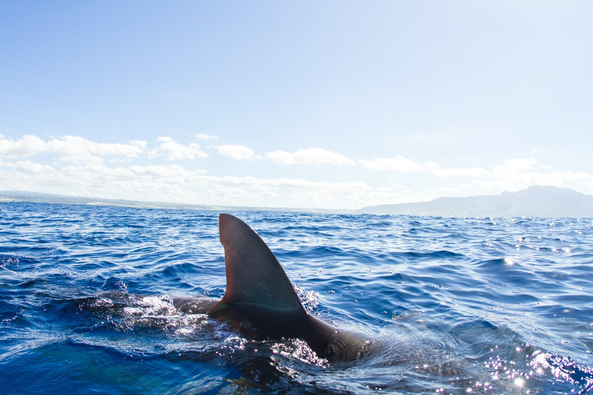 Shark Fin Sales to be Banned